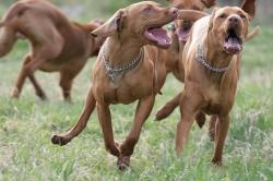 Víkendový výcvik loveckých psů - Lučkovice