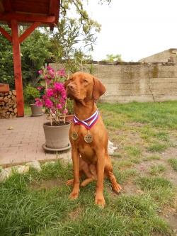 Mezinárodní výstava psů BRATISLAVA