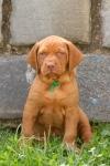 6 týdenní štěnda