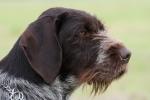 Archie z Koldínského lesa