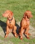 Dakota ( vlevo ) a Dixie Laváre Morávia
