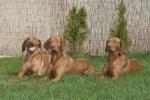 Daky ( uprostřed ) s Kesskou a Meggie