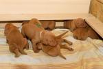 Déčková štěnda mají dva a půl týdne