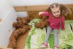 Evička a 3 týdenní štěňátka