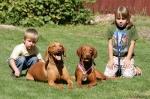 Kačka a Markétka s našimi psy