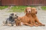 S Meggie, Gobi a Nely