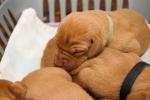 štěnda ve věku 1 týdne