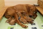 Unavená mamina:-)